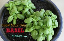 Grow Your Own Basil and Save 001