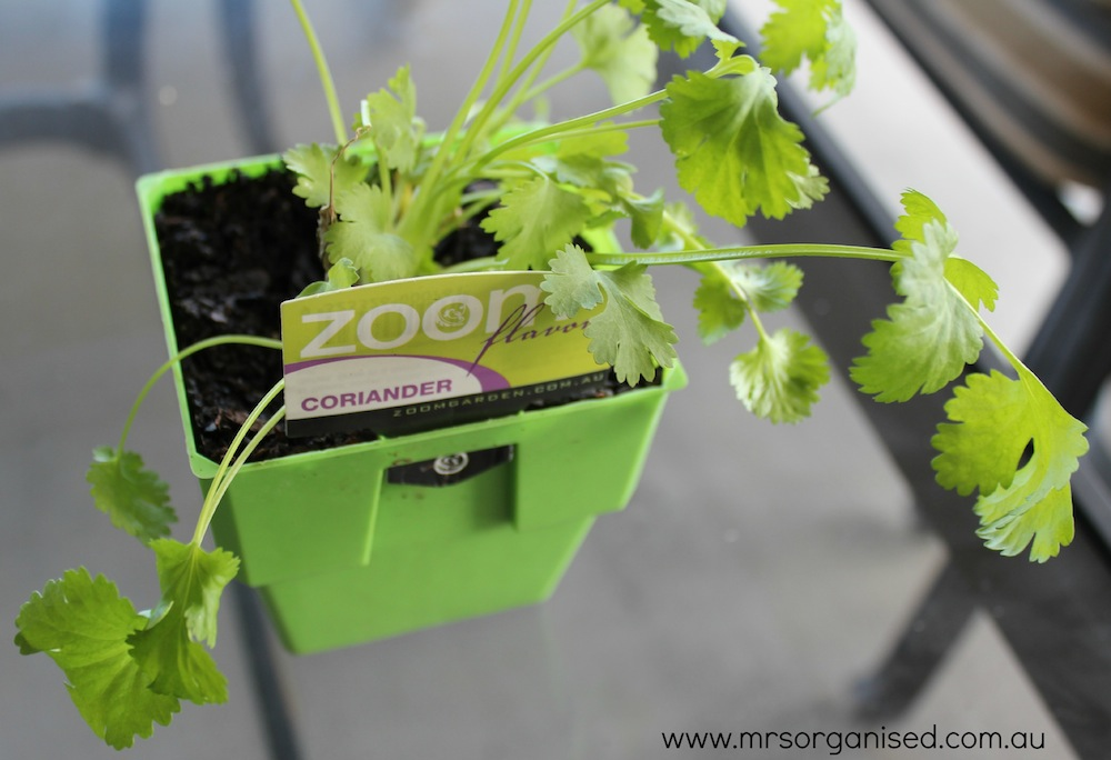 Grow Your Own Basil and Save 003