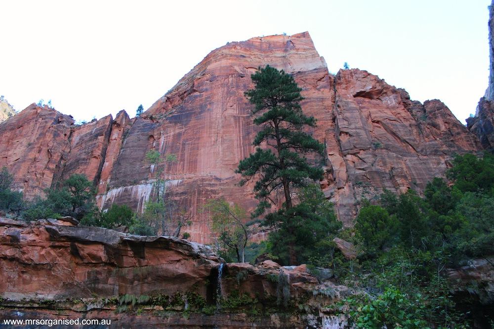 Zion National Park 008